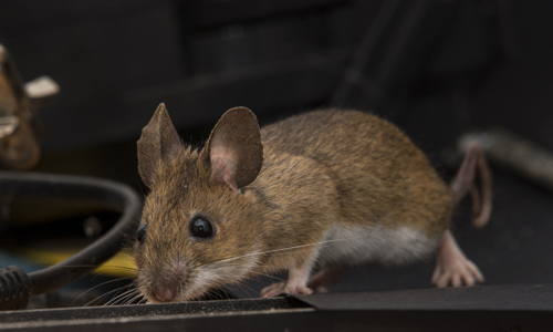 House,Mouse,On,A,Table